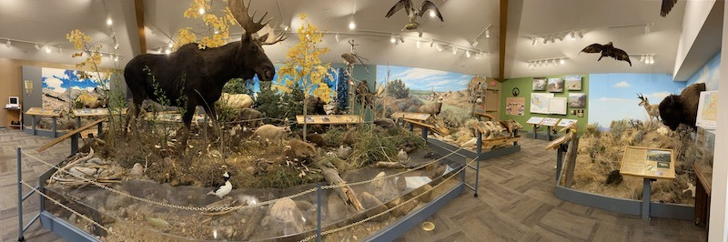 Panoramic view of the wildlife display at the Wyoming Game and Fish Office in Lander, Wyoming